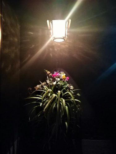 夜の電灯も、「だんだん畑」の花と合わせてもっと素敵に!